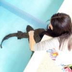 水族館に行きたい季節ですね♪(個人的主観) サメ、マグロさんこんにちわ